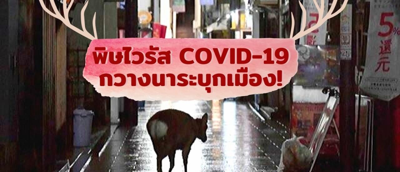 พิษไวรัส COVID-19 ทำกวางเมืองนาระอดอยากจนต้องคุ้ยขยะหาอาหารเอง
